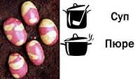 Семена картофеля Бикини (Голландия)Репр.СН-1 Фракц.(40-55)