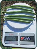 Семена спаржевой фасоли Пайк \ Pajk 5000 семян Clause