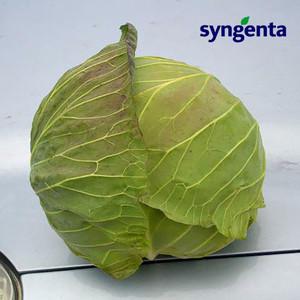 Семена капусты Девотор F1 (Syngenta) 2500 семян — средне-поздний гибрид (120-125 дней), белокочанная.