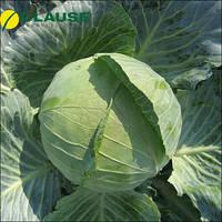 Семена капусты Бригадир F1 (Clause), 2500 семян — средне-поздняя (110-120 дней), белокочанная