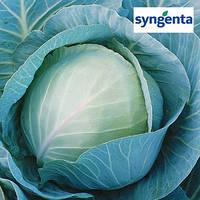 Семена капусты Триперио F1 (Syngenta), 2500 семян — средне-поздний гибрид (70-75 дней), белокочанная.