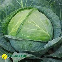 Семена капусты Центурион F1 (Clause), 2500 семян — средне-поздняя (100-110 дней), белокочанная