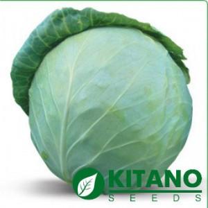 Семена капусты Акира F1 1000 сем — ранняя 48-52 дн, устойчивая к растрескиванию (УЦЕНКА)