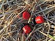 Регулируемая капельница для капельного полива «ENDER» струйного типа (капельное орошение), фото 3