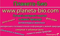 Фотосайт Планета Био - конкурсы про животных, сайт красивых картинок и фотоприколов