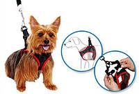Поводок-упряжка для выгуливания маленьких собачек (Comfy Control For Small Dogs Harness) Хит продаж!