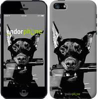 "Чехол на iPhone 5 Доберман ""2745c-18-532"""