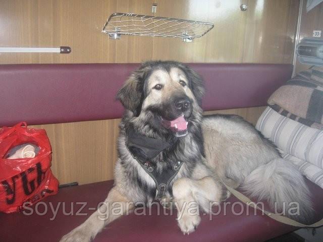Новые правила железнодорожных перевозок собак