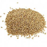 Зерно пшеницы органическое для проращивания 0,5 кг
