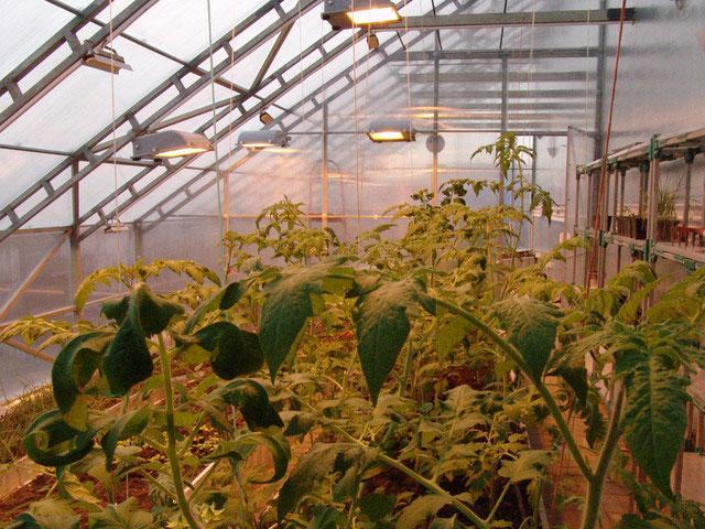 теплицы фермерские в кременчуге