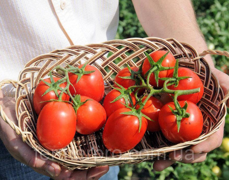 Семена томата Бенито F1 \ Benito F1 5 грамм Bejo