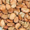 Семена бобов