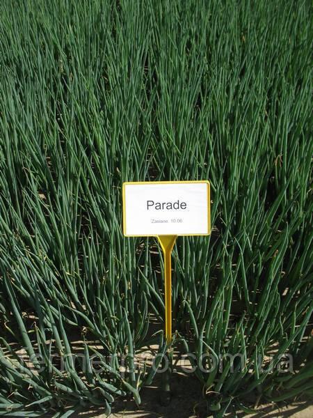 Насіння цибулі Параді \ Parade 250.000 насіння Bejo zaden