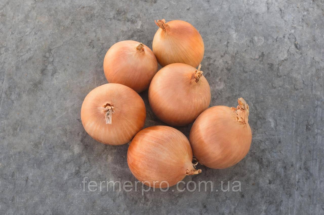 Семена лука Седона F1 \ Sedona F1 250.000 семян Bejo zaden