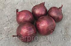 Семена лука Ред рум F1 \ Red Rum F1 250.000 семян Bejo Zaden