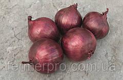 Семена лука Ред рум F1 \ Red Rum F1 10000 семян Bejo Zaden