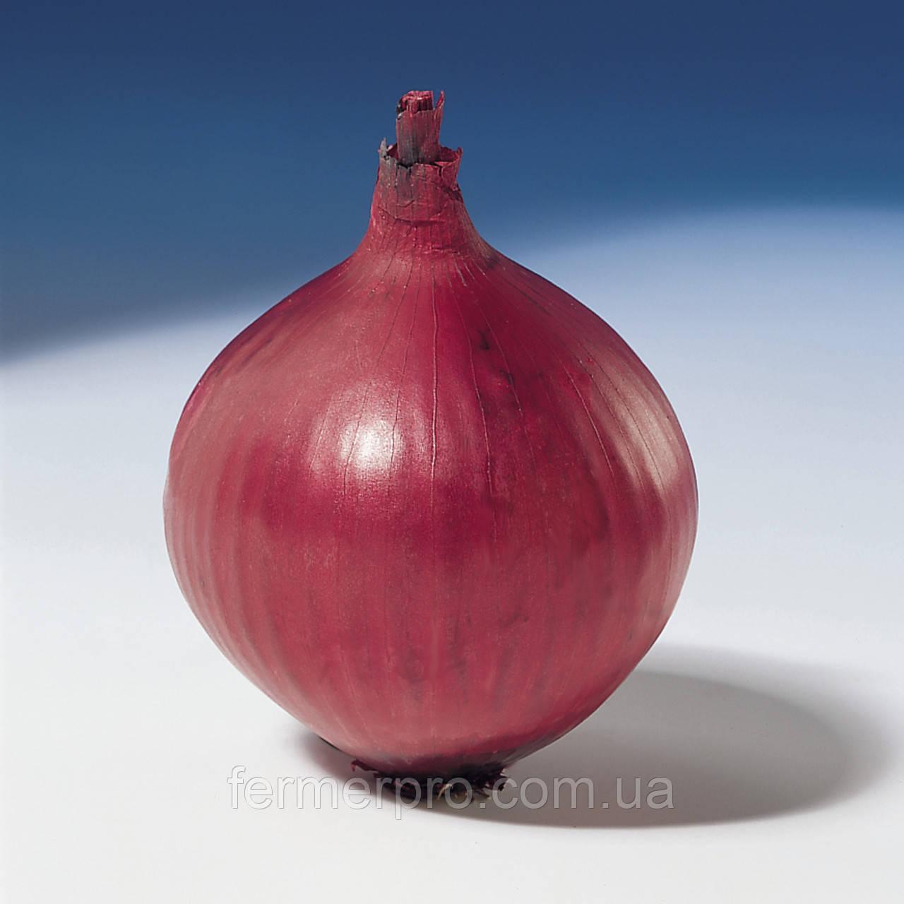 Насіння червоного цибулі Ред Барон \ Red Baron 250.000 насіння Bejo Zaden