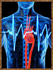 Артериальная гипертония - не упустите момент!