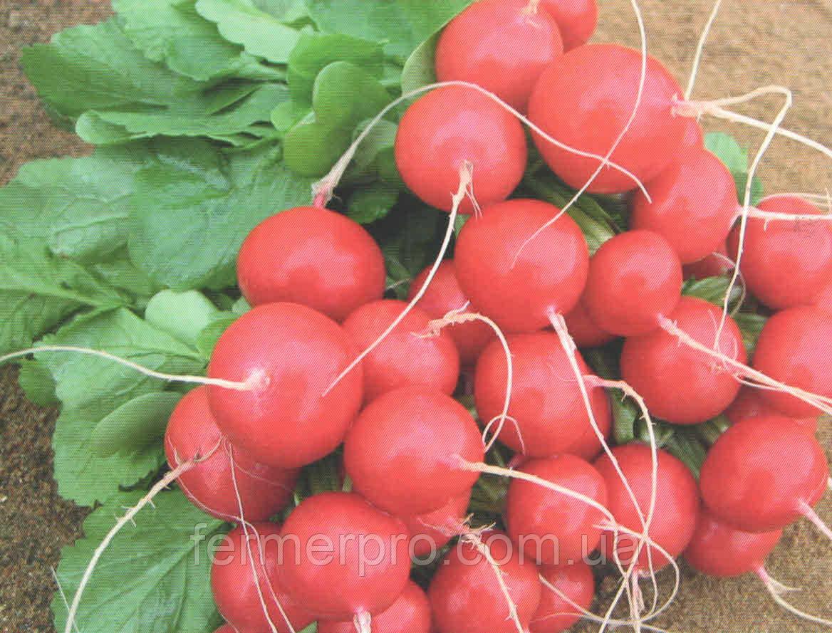 Семена редиса Ролекс F1 (2,25-2,50мм) 50000 семян  Bejo