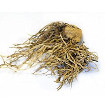 Кукольник (чемерица) корень