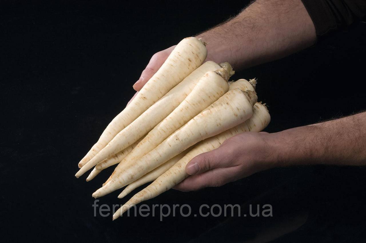 Семена корневой петрушки Игл \ Eagl 50 грамм Bejo zaden