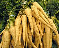Семена петрушки Арат \ Arat 50 грамм Bejo zaden