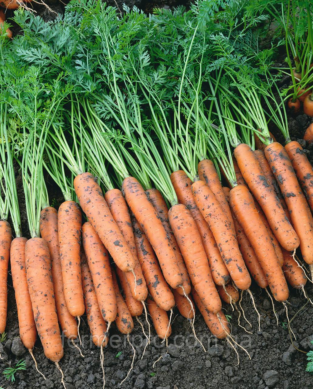 Семена моркови Наполи F1 (1.8-2.0мм) 25000 семян Bejo Zaden