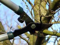 Санитарная обрезка веток со спуском спиленных частей на веревке (*)