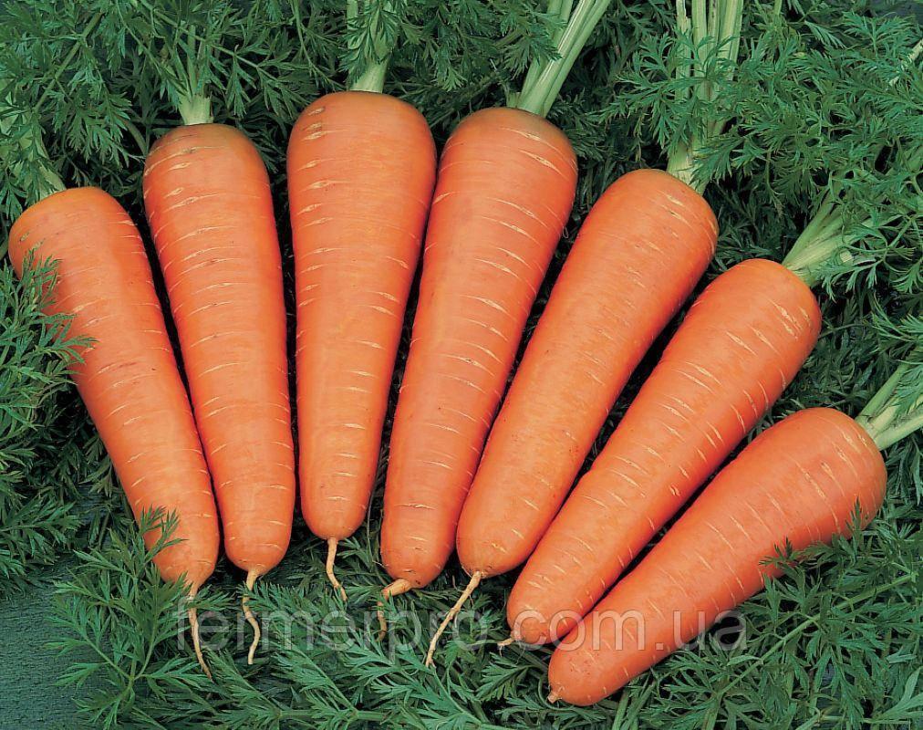 Семена моркови Канада F1 (2.2-2.4 мм) 1.000.000 семян Bejo Zaden
