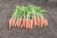 Семена моркови Кантербюри F1 \ Canterbury F1 (1.8- 2.0 mm) 1.000.000 семян Bejo Zaden