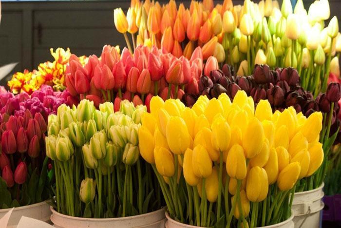 Цветов купить цветы в кривом роге для