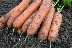 Семена моркови Номинатор F1 \ Nominator F1 (1.6-1.8mm) 1.000.000 Bejo Zaden