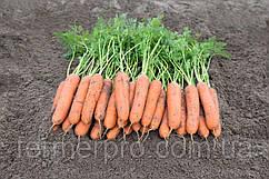 Семена моркови Ньюкасл F1 \ Newcastle F1 (1.8-1.8mm) 1.000.000 семян Bejo Zaden