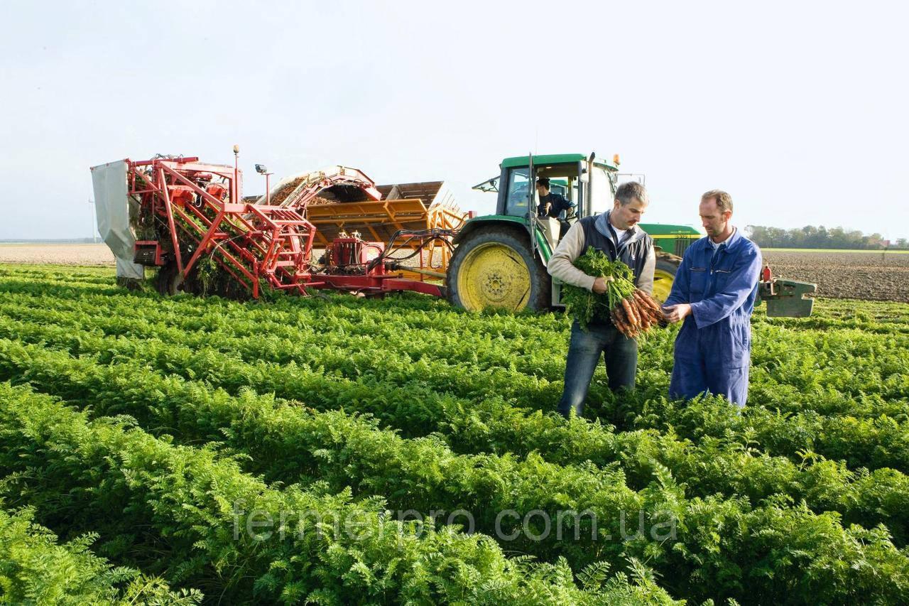 Семена моркови Нерак F1 \ Nerac F1 (1.6-1.8mm) 1.000.000 семян Bejo Zaden