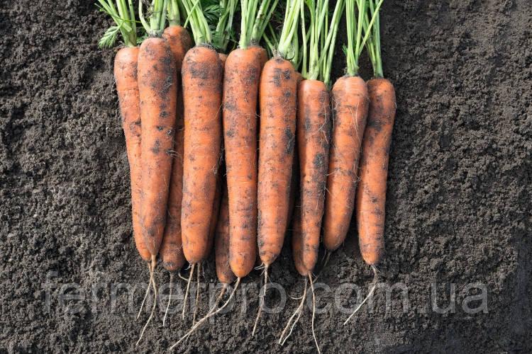 Насіння моркви Норв F1 \ Norway F1 (1.6-1.8 mm) 1.000.000 насіння Bejo Zaden