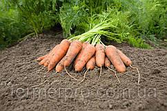 Семена моркови Карини  F1 \ Carini F1 500 грамм Bejo Zaden