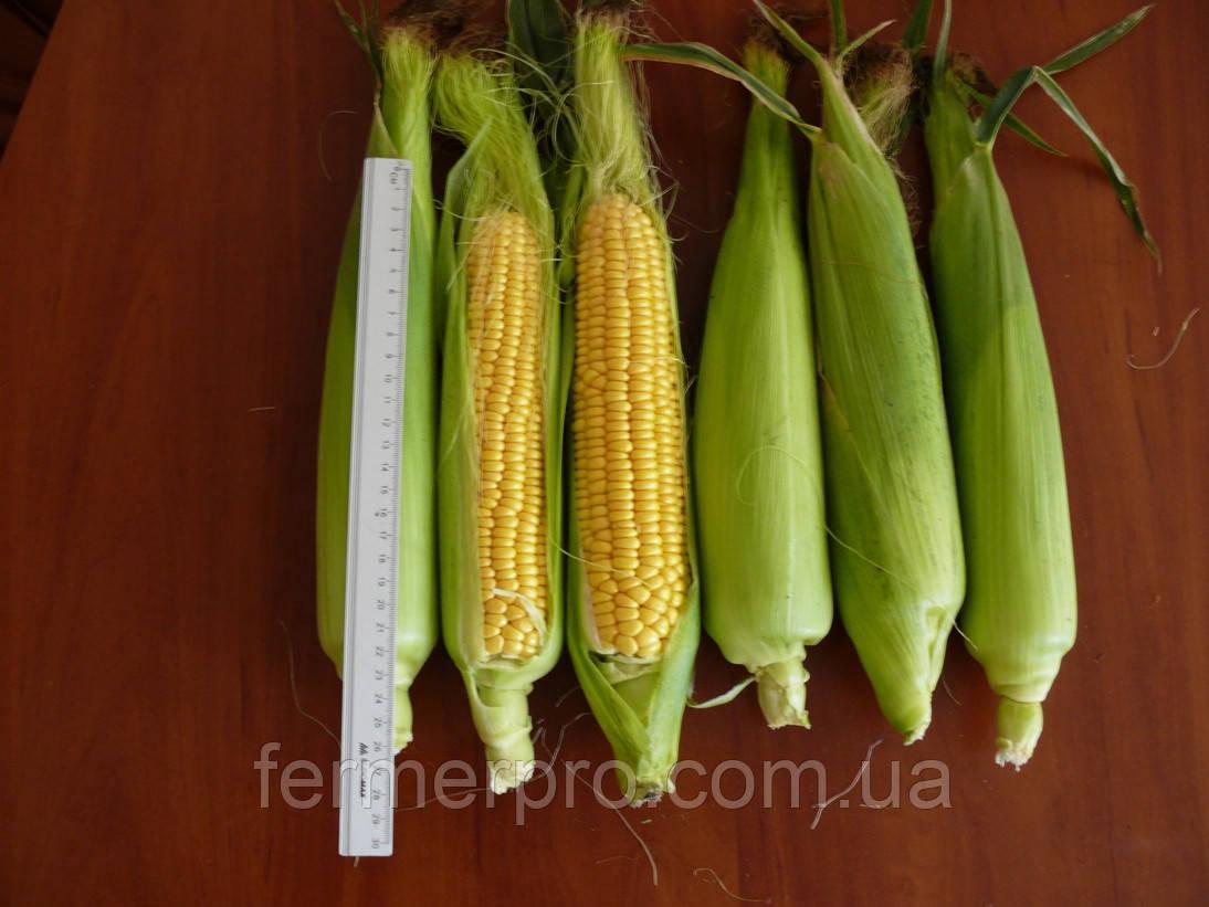Семена кукурузы Рання Насолода F1 2500 семян Lark Seeds