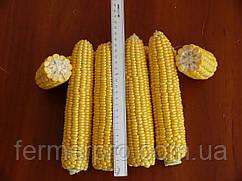 Семена кукурузы Рання Насолода F1 25000 семян Lark Seeds