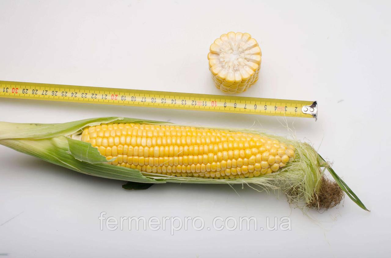 Семена кукуруза Добрыня 25000 семян Lark seeds