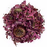 Эхинацея пурпурная цветок