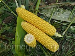 Семена кукурузы Уокер F1 25000 семян Lark Seeds