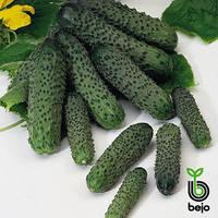 Семена огурца Амант F1 (Бейо/Bejo), 1000 семян — ультраранний гибрид (40-45 дней), партенокарпик