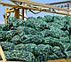 Семена баклажана Нарвал F1 1000 семян Lark Seeds, фото 3