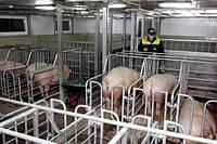 Поставка технологического оборудования для коровников и свиноферм