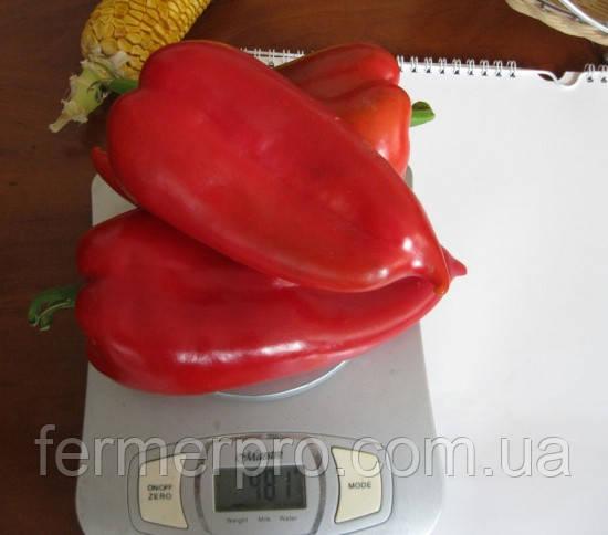 Семена перца Ред Каунт F1 \ Red Kaunt F1 1000 семян Lark Seeds