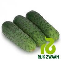 Семена огурца Караоке F1 (Rijk Zwaan, АГРОПАК+), 100 семян — ранний гибрид (50 дней), партенокарпик