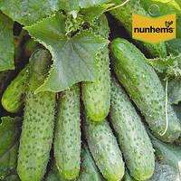 Семена огурца Криспина F1 (Nunhems, САДЫБА ЦЕНТР), 10 семян — ранний гибрид (38-40 дней), партенокарпик