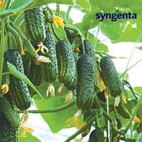 Семена огурца Эколь F1 (Syngenta), 500 семян — ранний гибрид (42-45 дней), партенокарпик