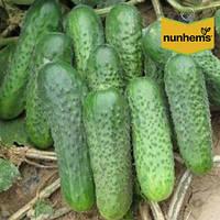 Семена огурца Джустина F1/Джастина F1 (Nunhems, АГРОПАК+), 100 семян — ранний гибрид (45-50 дней), партенокарп