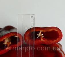 Семена перца Слон F1 \ Slon F1 500 семян Lark Seeds